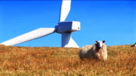 wind turbine with sheep in front video