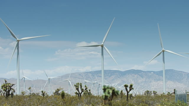 Wind Turbines and Desert Plants video