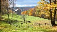 Windblown Autumn Leaves video