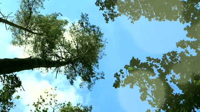 Windblown trees video