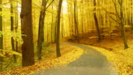 HD DOLLY: Winding Forest Road In Autumn video