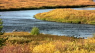 Winding River Ripples through a colorful landscape video