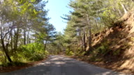 winding road through the woodland, GoPro video