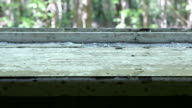 Windowsill in the deserted house. Smooth and slow dolly shot. video