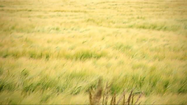 Windy field video