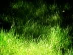 Windy Lawn PAL video