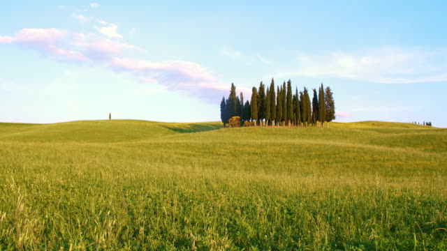 DS Windy meadow surrounding cypress trees video