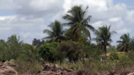 Windy palm trees video