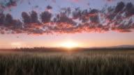 Windy wheat video