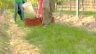 Wine Grape Harvest video