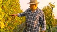 TS Winegrower Checking The Grape video
