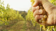 HD: Winegrower Squeezing Grapes video