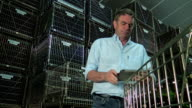 Winemaker working inventory management of its wine bottles in his cellar video