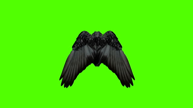 Wings open and close on green screen. video