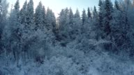 Winter aerial views in snowy forest video