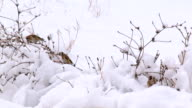 Winter birds pecking at the seeds video