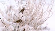 winter birds video
