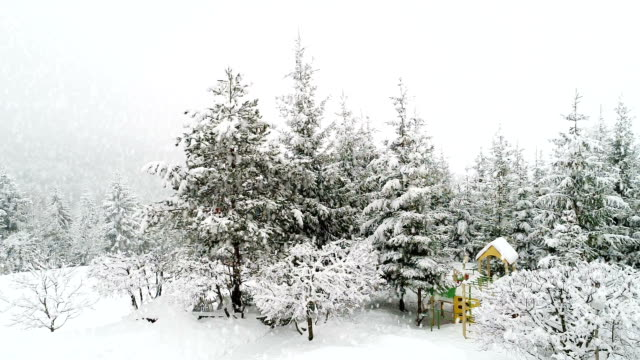 Winter Carpathian landscape, Christmas trees in the snow video