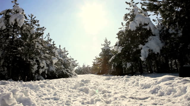Winter Forest At Sunset video