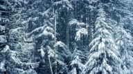Winter Forest In Heavy Snowfall video