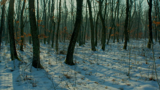 Winter forest time lapse, motorized slider HDR shot video