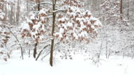 Winter forest. Trees with dry leaves under the snow. video