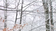 HD: Winter forest video