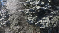 HD:  Winter forest. video