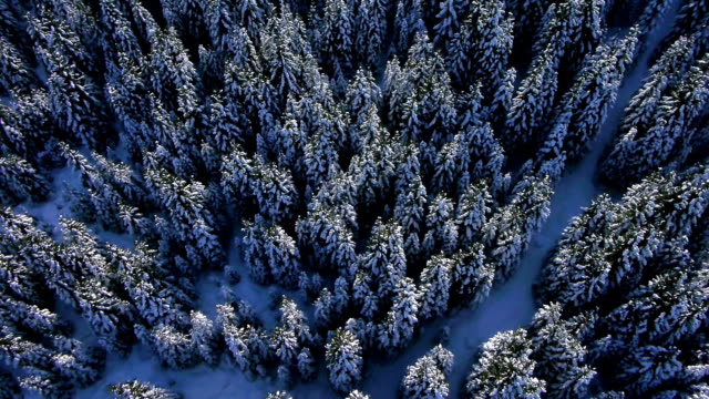 AERIAL: Winter forest video