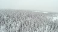 Winter Forest With Frosty Trees From Air video