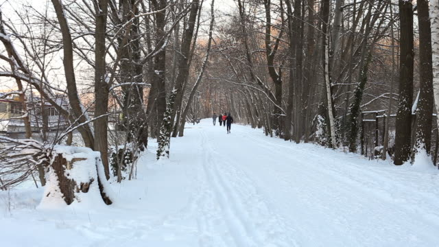 Winter Forest with people video