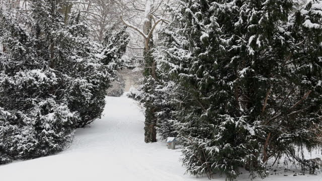 Winter Forest with snowfall video