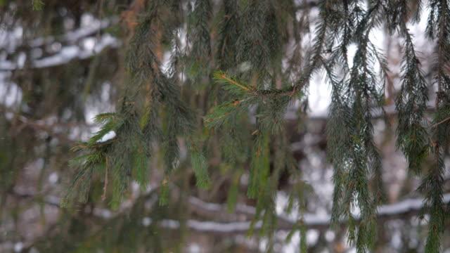Winter garden. Christmas Tree. video