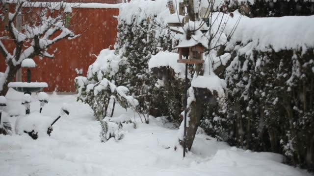 Winter Garden - HD Video video