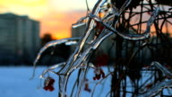 Winter Icicle Sunrise Sunset Winter Timelapse video