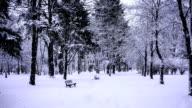 winter in a park (loop) video
