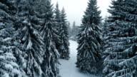 Winter in mountain video