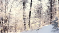 Winter landscape. Snowy winter in forest. Panning on winter forest video