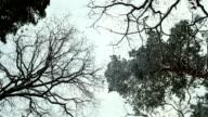Winter Landscape video