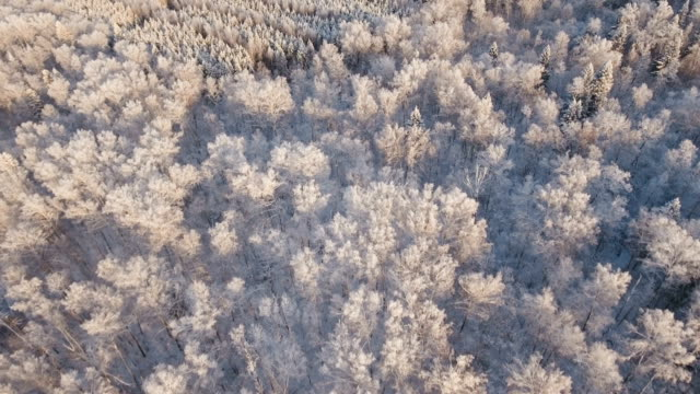 Winter landscape with forest video