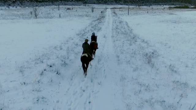 winter landscape with horses video