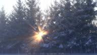 winter morning sunlight and fog in park video