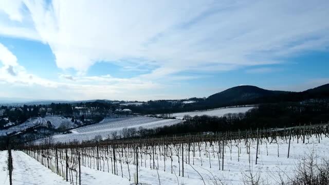 winter of grape field video