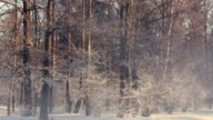 Winter park. Misty morning in winter park. Snow covered trees in winter park video