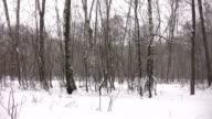 winter park panorama video