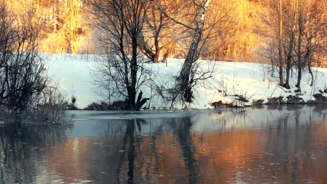 Winter river. River bank in winter forest. Sunlight in winter forest video
