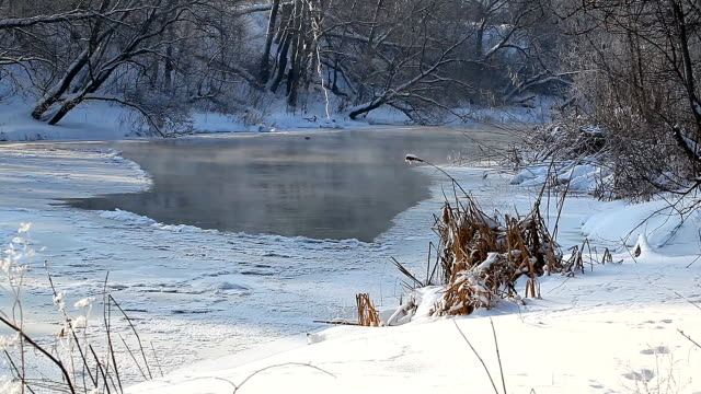 Winter rural landscape Frozen River in the forest video