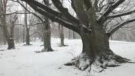 Winter Scenic video