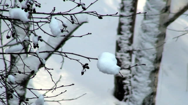 Winter scenics four (HD 1080/50i) video