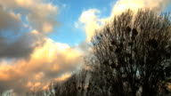 winter sky at windy day video